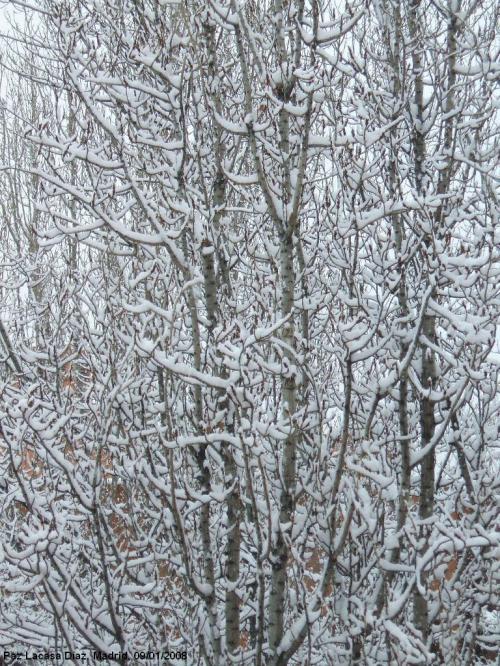 nieve-en-madrid-4